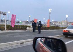 東京インテリア近くで「迷いヤギ」捕獲
