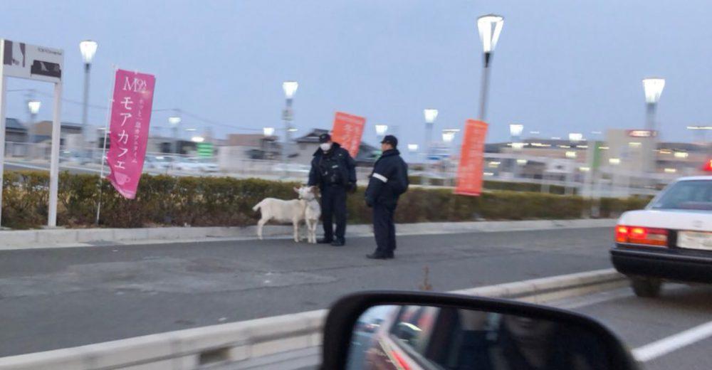 港区の東京インテリア近くで「迷いヤギ」捕獲 半年前にも同様の事案